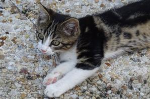 un petit chaton qui s'est invité lol