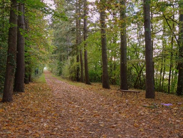16.10.2018 petite balade dans la forêt d'à coté
