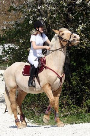 « On a vu des chevaux et des cavaliers parfaitement d'accord : c'était assez souvent des chevaux de bois. »