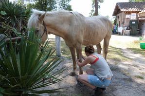 « Ce n'est jamais la faute du cheval. »