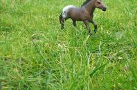 Un cheval sauvage.