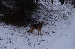 Petite balade dans la neige avec l'amis Jo et triste découverte