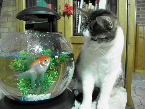 Un chat et un poisson....