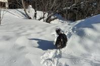 Miam ! la neige, c'est bon !