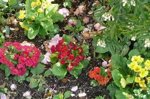 Mon  jardin  le premier dimanche d'Avril