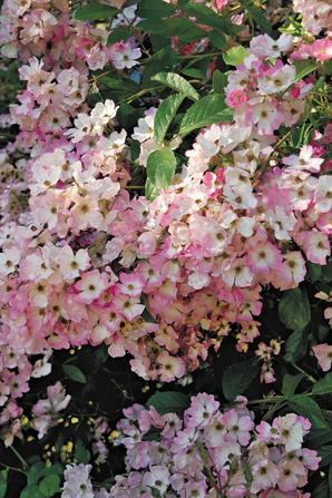 que de flores