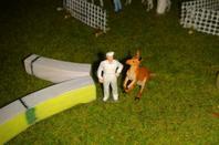 intanto gli altri animali sono pronti per entrare in pista.