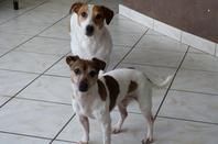Amy et Bud à la maison