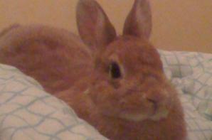 Mon lapin Petit Pinou