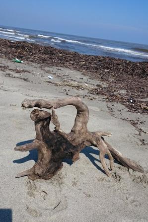 Bois flottés au gré des plages !