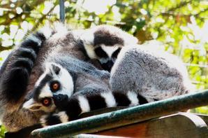 Grosse journée au Zoo de la Palmyre ♥ ( Pour voir les photos coupées en entier cliquer dessus :D )
