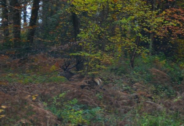 chasse  du  19/11/2013