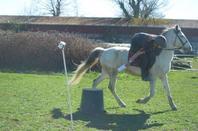 Jour 6 STAV : Pony Games