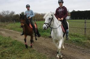 option hippologie équitation Jour 3 Groupe 2