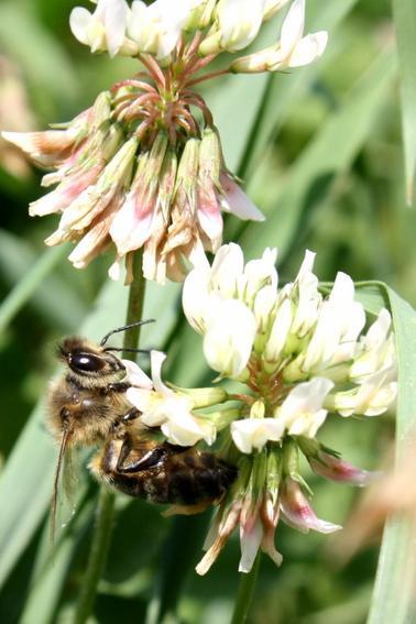 Une abeille vaut mieux que mille mouches.