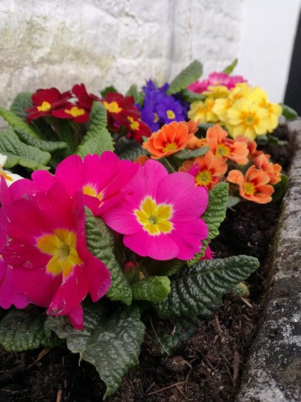 Quelques fleurs du petit jardin