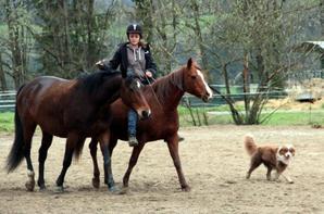 Ulanne cheval à tout faire !