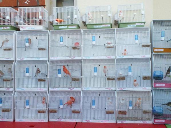 La 1ere exposition ornithologique en Tunisie ( suite )