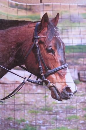 Dessin de cheval 2.30 h