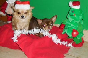 Oxana et stroedel vous souhaitent à leur tour de joyeuses fêtes