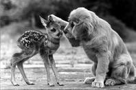 pour mes plus fideles amis les animaux