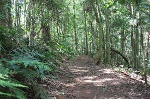 Mount Glorious The Mountain in Queensland, Australia