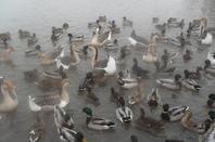 petite sortir avec ludo visite depuis un obsevatoire des canards durand le grand froid tres joli a voire