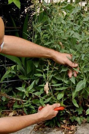 Phytothérapie : ces plantes qui vous aident à dormir