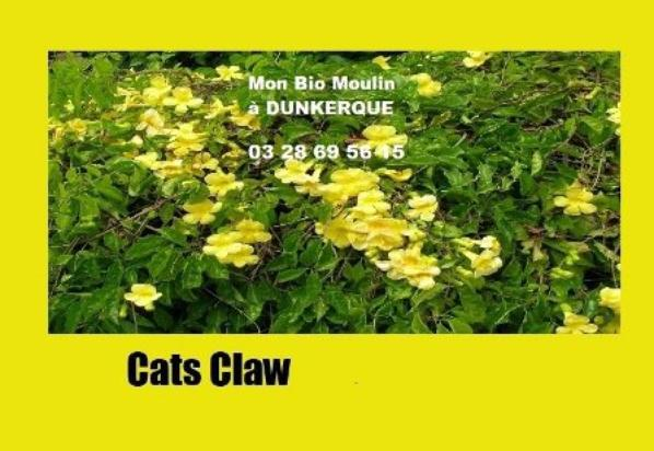 Cat's claw ou Griffe de chat