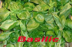 Huile essentielle de basilic tropical