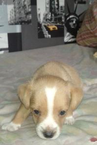 mon chien hugo =)