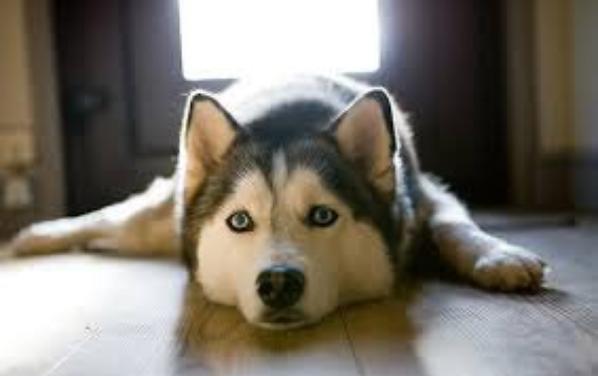 Mon amour de chienne