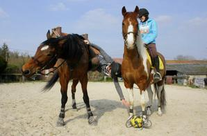 Le Horse Ball