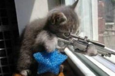 Voici des petits chats