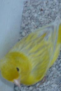 Agaat opaal geel schimmel foto's buiten gemaakt !!