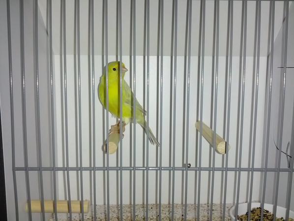 42 vogels klaar voor VWM show