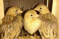 Bijna  uit het nest !!!!!!!!!!