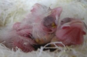 Jongen in nest 2014