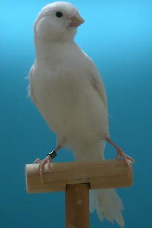 95 Wit geboren 8-3-2014
