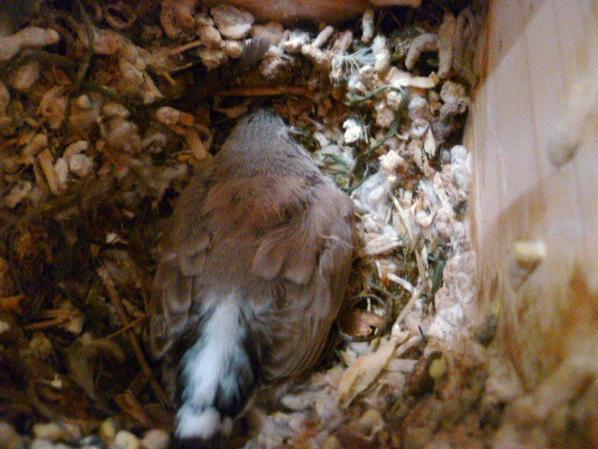 il sort du nid depuis ce matin