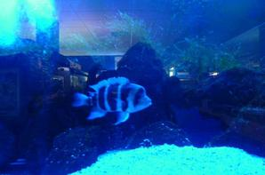 aquarium a calais