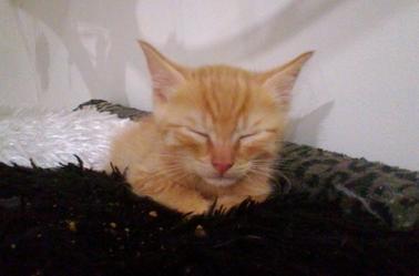 Mon nouveau chaton
