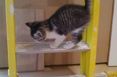 Eliot mon nouveau chaton il est trop kawaii~♥