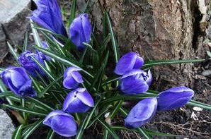 Le printemps arrive. Le printemps est là.