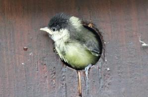 Il est temps de quitter le nid douillet.