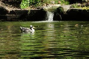Flânerie au parc de la Dodaine à Nivelles