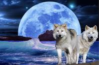 Loups où êtes vous ? lol