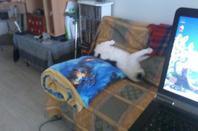 c'est pas mon chat ! mais il s'installe !!!