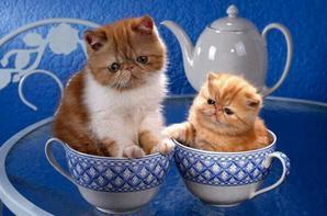 Nos amis ! les chats !