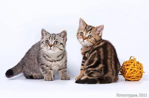 Nos amis ! les chats ! 3